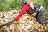FADAMA Bank Targets Women, Youths For Empowerment – Coordinator