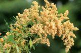 Scientists Go Against The Grain To Make Dubai An Unlikely Quinoa Hotspot