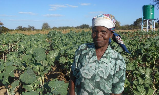 Moddie Msebele uses her phone to help her farm. Photograph: Practical Action