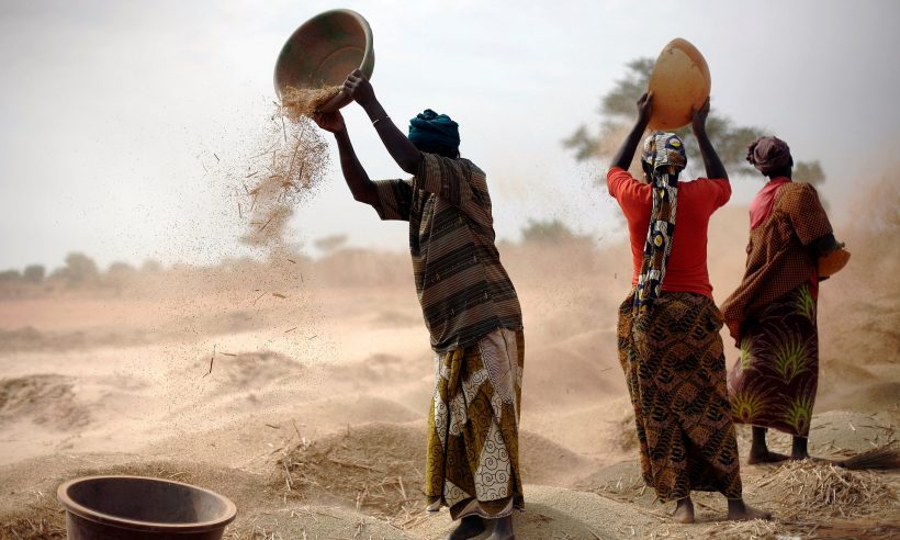 Malian women sift wheat in a field near Segou, central Mali. The act has been criticised for missing opportunities to support small-scale farmers in claiming their rights. Photograph: Jerome Delay/AP