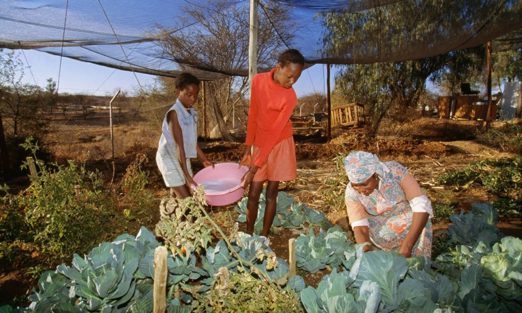 A family waters crops with dishwater in a township in Namibia's capital, Windhoek. Photograph: Alamy Stock Photo