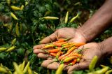 How Digital Revolution Can Help Level The Playing Field for African Women In Agriculture
