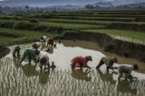 A Breakthrough In Africa's Rice Production