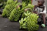 Zimbabwe : Goverment Applaudes Agricultural Scheme Toward Women