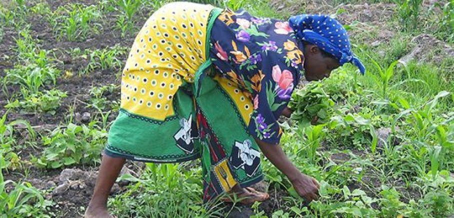 Tanzania_women_farming_540_0