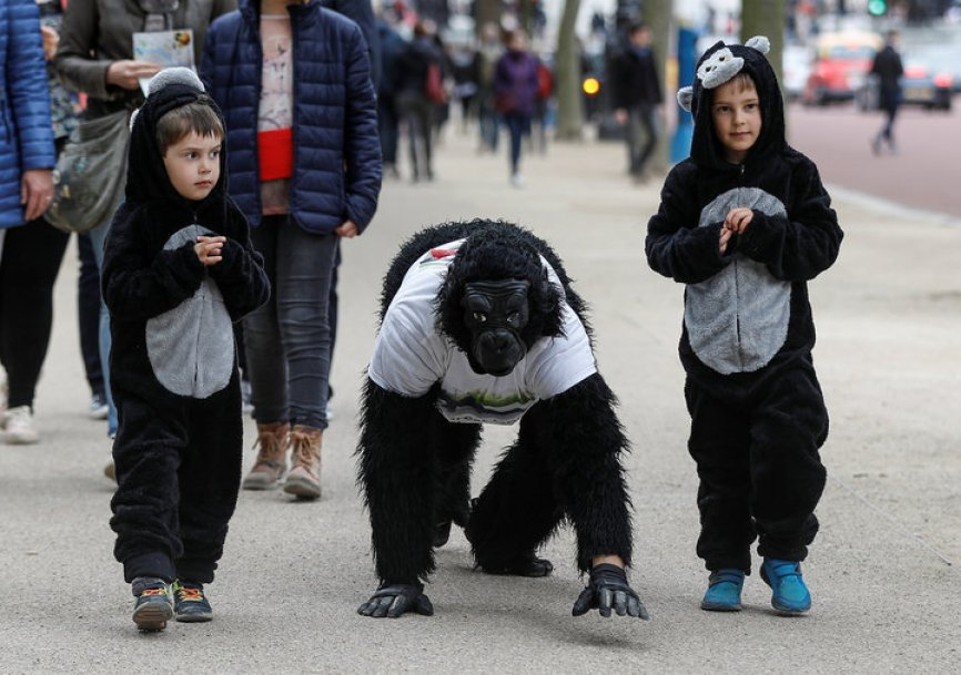 Charity event competitor Tom Harrison crawls towards the finish of the London Marathon, dressed in a gorilla outfit to raise money for the Gorilla Foundation, in London April 29, 2017.  His children Nicholas and Alex walk with him. REUTERS/Peter Nicholls