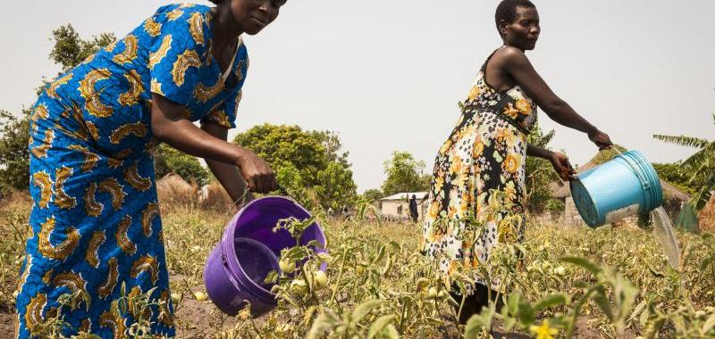 No Trees, No Crops, No Jobs: Burkina Faso's Women Fall Back On Hard Labour