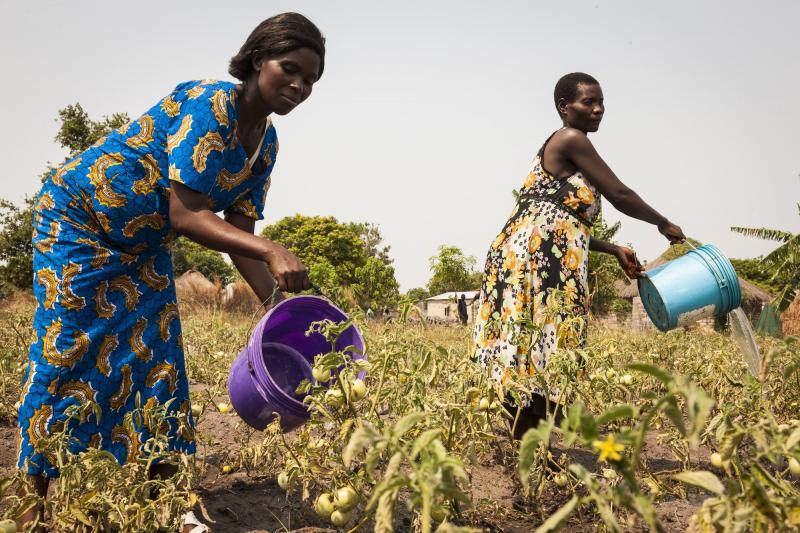 zambia farming