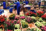 The Revolution Of Women In Kenya's Flower Industry