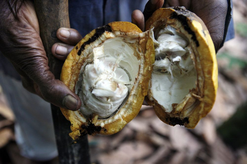 Cocoa farmers want an OPEC of their own. Photographer: Jane Hahn/Bloomberg