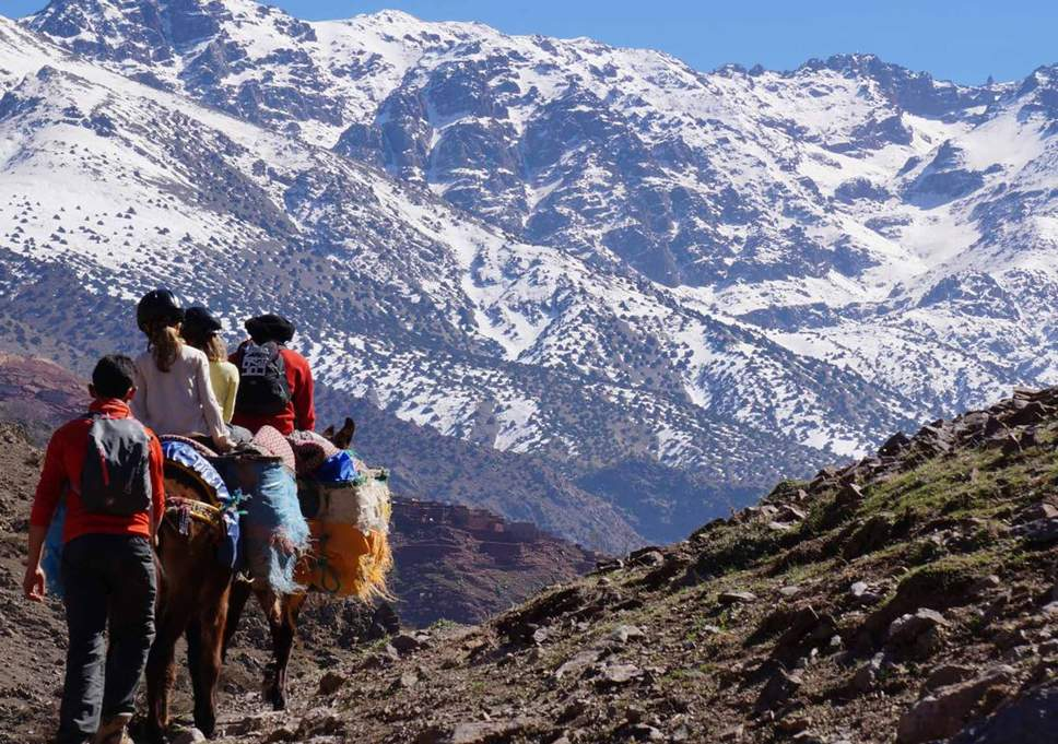 morocco_mule