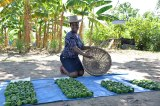 Nigerian Govt Launches 'Gender Policy On Agriculture'
