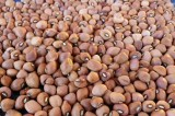 Nigeria Imports N16 Billion Cowpea From Cameroon, Burkina Faso Yearly
