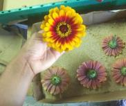 Place zinnias upside down in flat boxes with about 1/2 inch of sand to dry.