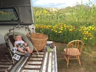 Marigolds, zinnias, statice, sunflowers and sorghum plot in the fields below the house. My son Luis hanging out on the tailgate of our truck while I harvest flowers.
