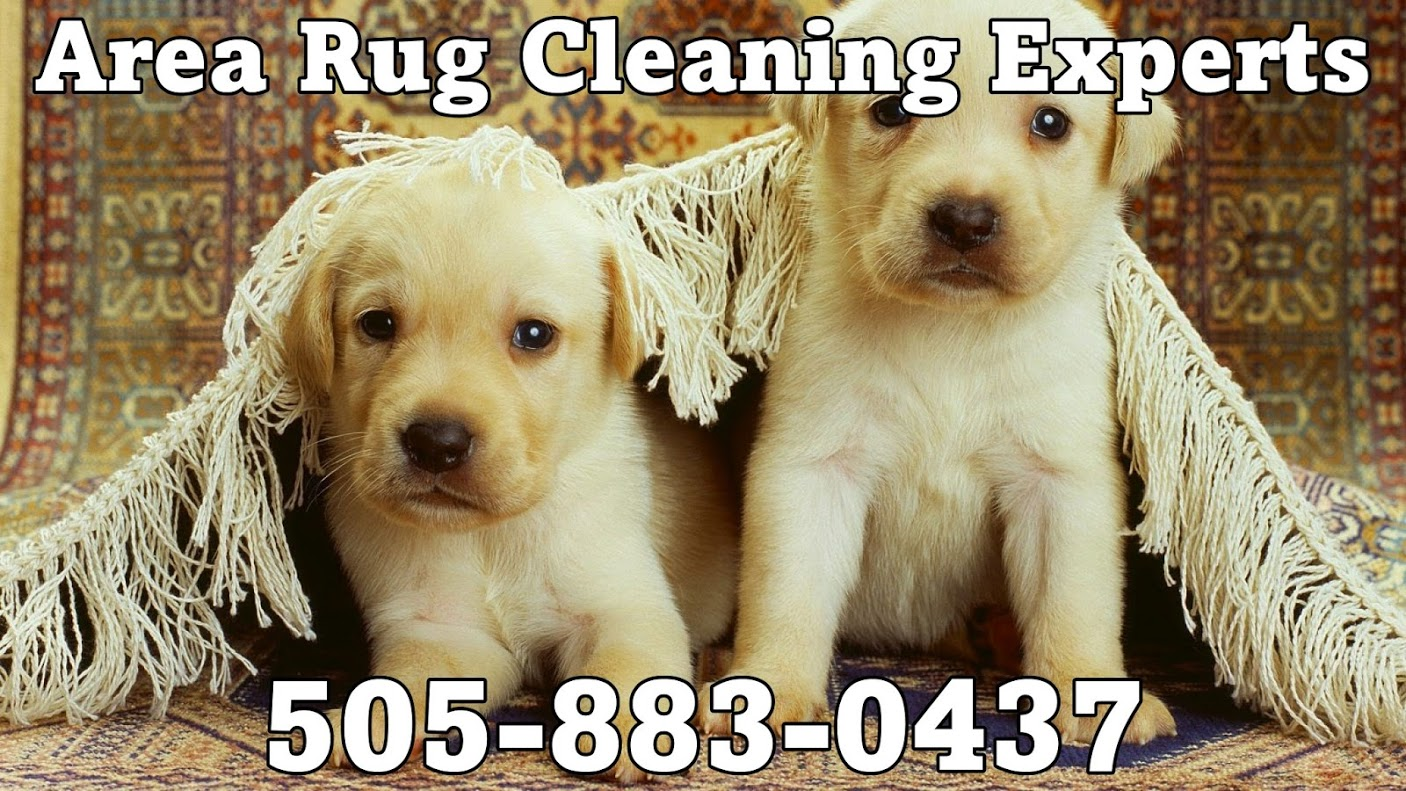 Carpet Cleaning And The New Pet Owner In Albuquerque Thoroclean