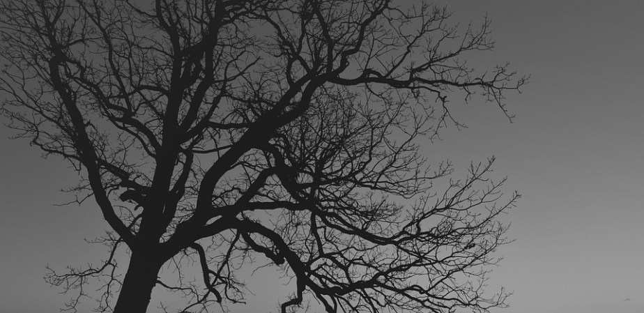 tree-280126_960_720
