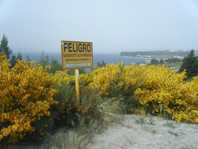 "A good Spanish word to learn is ""Peligro"", which means danger. Which is also not something you'd expect on a hill filled with bright yellow flowers."