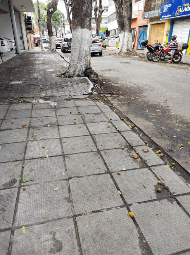 Foto 5 – sudário de pavimentos de passeios e oitis