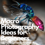 [Most Updated] 20+ Tips & Tricks Macro Photography Ideas for Beginners