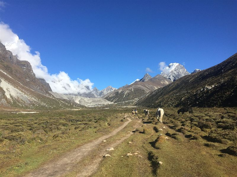 Wandering with Himalayan Mustangs on the Everest Base Camp Hike from Pheriche to Dughla