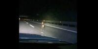 A25, CAPRIOLO CORRE SULL' AUTOSTRADA: POLIZIA STRADALE LO AIUTA AD USCIRE. VIDEO