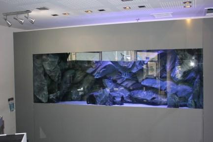 חנות דגי אקזוטים תובל רמת גן