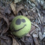 Herald to Halloween? Walnut that looks like Jack Skellington