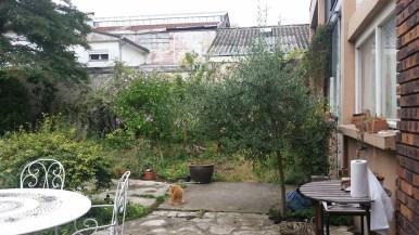 Calamine in the garden.