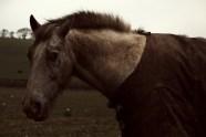 Horse in Totnes, Devon