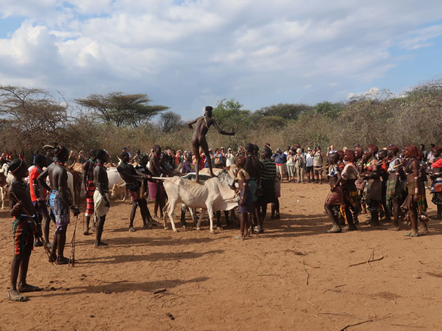 The Culture Behind The Bull Jumping Ceremony