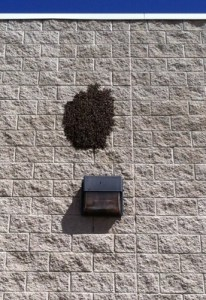 An image of a swarm of bees on a block wall.