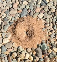 An image of ants on an anthill in a rock yard.