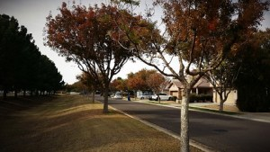 An image of trees, a lawn, and homes on a residential street. Winter pests definitely lurk in those homes.