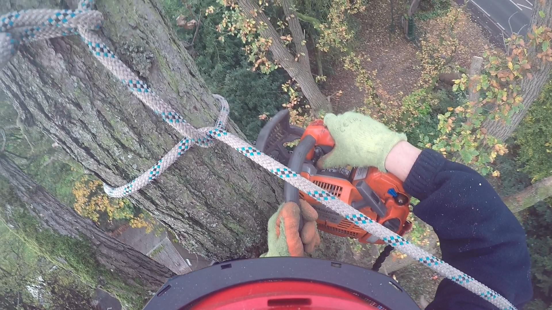 Tree Surgery Chester