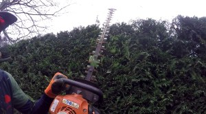 Hedge Work Chester, Cheshire