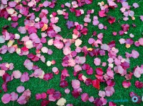 leaves1-1