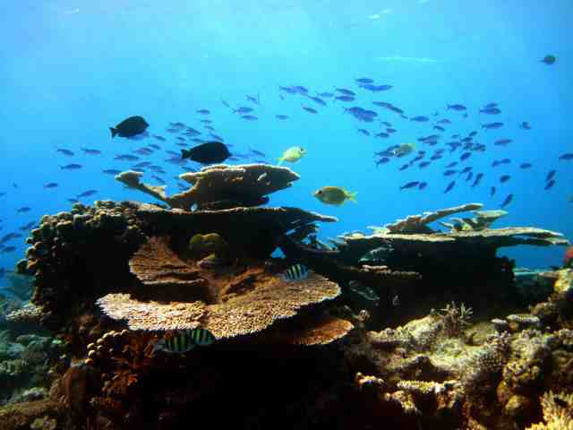 hadahaa_reef_background_pic copy