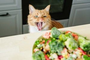 Plant Based Diets Cat looking at raw vegetables Absolutely Adell
