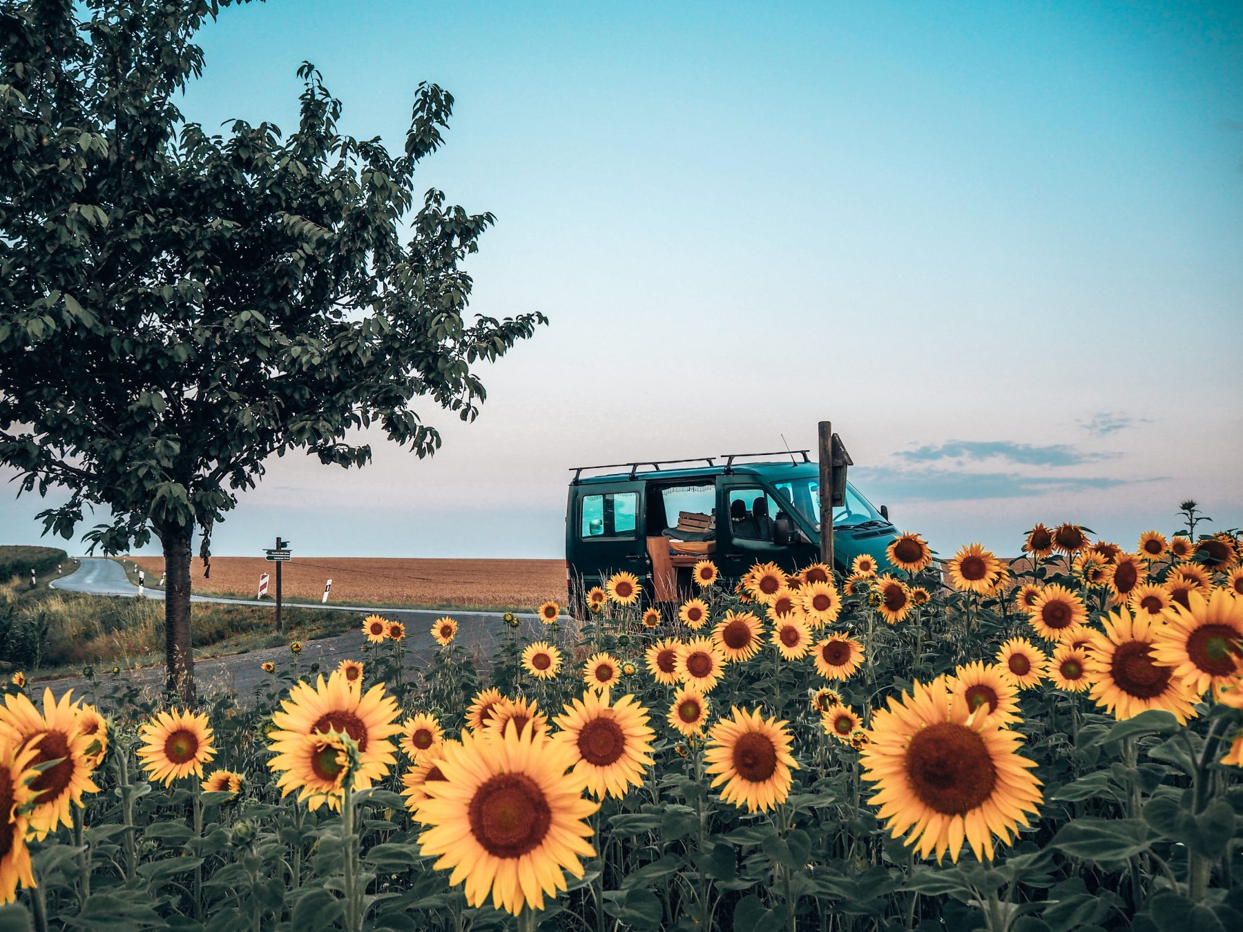 Sunflower vanlife