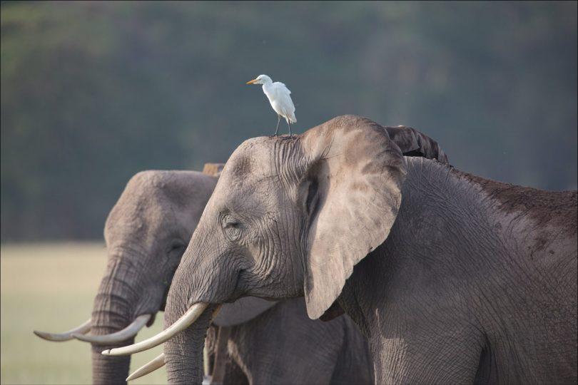 Elephants enjoying the sun