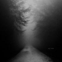 foggy trip #2