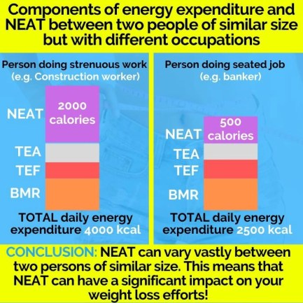 this picture shows the third reason why you are not losing weight: decreased NEAT and its affect on daily energy expenditure
