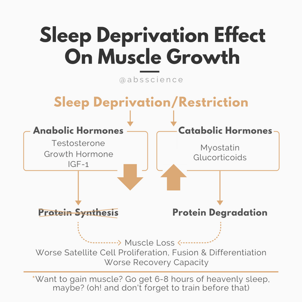 Sleep deprivation results in reductions in IGF-1 and testosterone concentrations—hormones that are essential for muscle growth. So if you want to build muscle, make sure to get 6-8 hours to maximize your muscle growth.