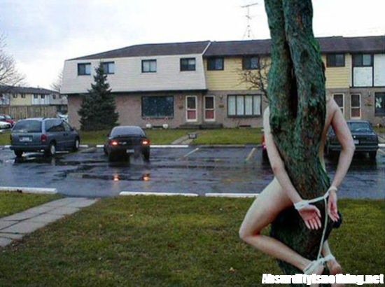 Nuda legata a un albero