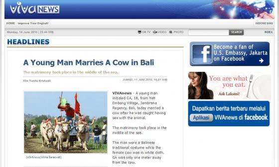 Costretto a sposare una mucca dopo aver fatto sesso con lei - VIVANews