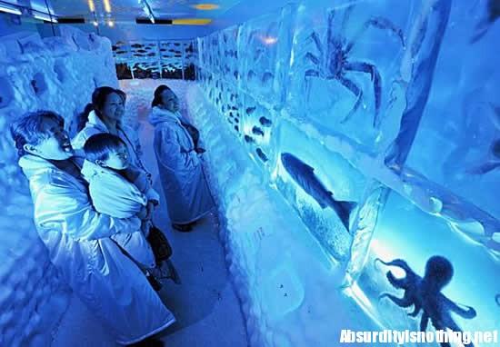 Frozen Aquarium