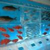 Froozen Aquarium