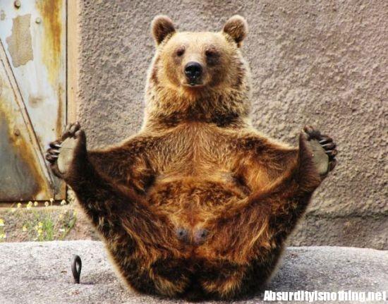 Yogi l'orso cha fa yoga