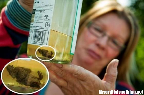 Rana in una bottiglia di vino
